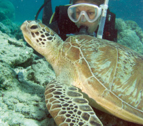 Diving with a friendly turtle
