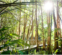Boardwalks throughout the magical gardens of Kewarra Beach Resort