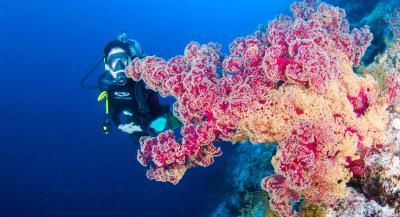 7 Nights - Coral Sea Safari