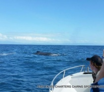 Added bonus of whale watching while reef fishing.